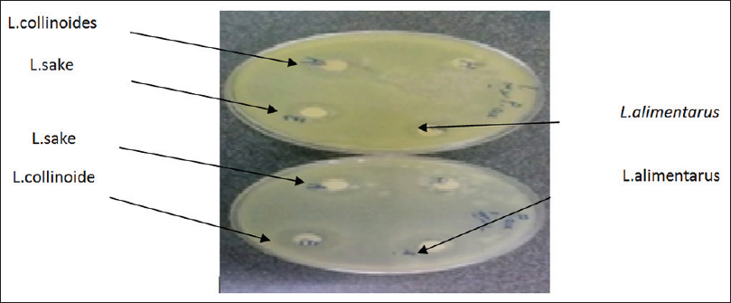 Inhibition zone of three Lactobacillus strains on the Pseudomonas aeruginosa and Bacillus subtilis