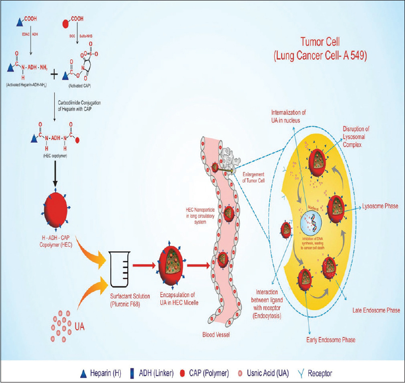 Schematic representation of formation of heparin modified‑cellulose nanoparticles and tumor targeting behavior heparin modified‑cellulose nanoparticles