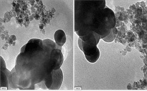 Figure 1: Scanning electron microscope (SEM) images of the nanoparticles of Cordia myxa fruits extract