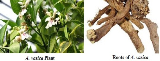 Figure 1: Image of Adathoda vasica, plant and its bark