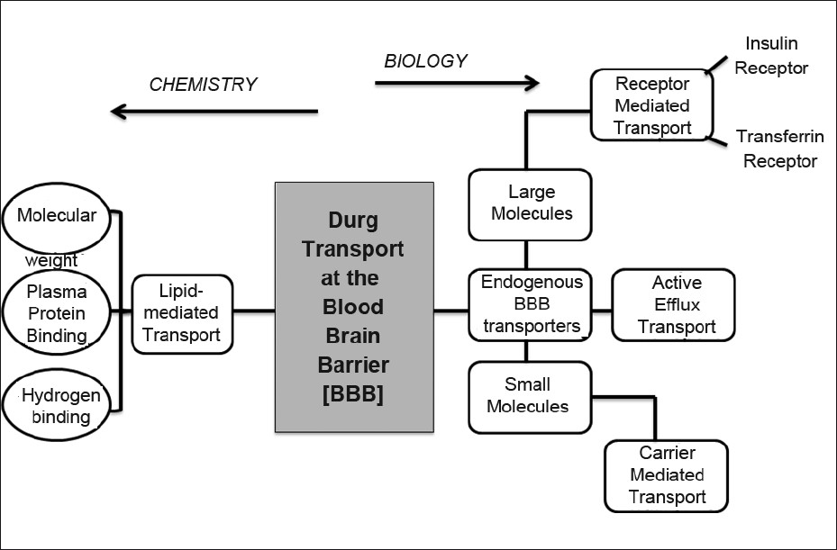 Outline of a program for developing blood-brain drug targeting strategies derived from either chemistry based or biologybased disciplines